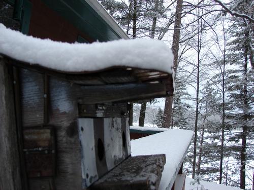 Birdfeeder Snow Report